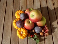 fruits_legumes_automne1