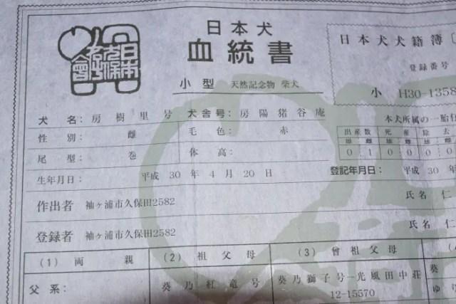 朋ちゃんの子の日本犬保存会血統書