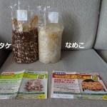 自宅で椎茸となめこ栽培キットをネットで買ってみた!初心者でもできるの?難しくないの?