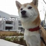 【12/8追記】ららぽーと立川立飛は犬同伴可?ドックカフェはあるの?預けられるの?全部の謎を聞いてきました!