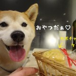 しぶごえ千倉の食事が美味しすぎる!ワンちゃん用ご飯も注文してみました!