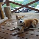 柴犬まると伊豆修善寺の手打ちそばの店「やまびこ」にいってきました!