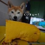 柴犬のかぼちゃチーズケーキをつくってみました!結構可愛いよ!