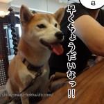 吉祥寺cafe&dining altBAU(アルバトウ)に柴犬まるといってきました!