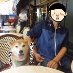 立川ペット可「ブラッスリーアミカル」で柴犬まるとガレットを食べてきた!