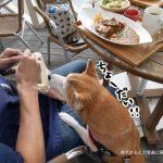 【11/8追記】神楽坂 茶寮ららぽーと立飛に柴犬まるとランチにいってきた!