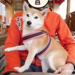 【11/14追記】立川の「パスタフローラ」に柴犬まると生パスタランチにいってきました!