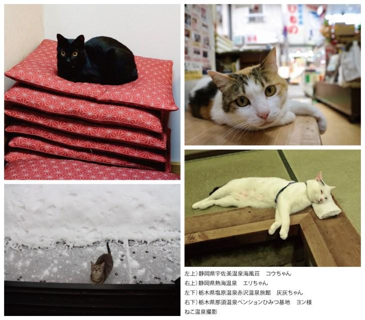 2018.02_shibuyanyanko_catonsen.jpg