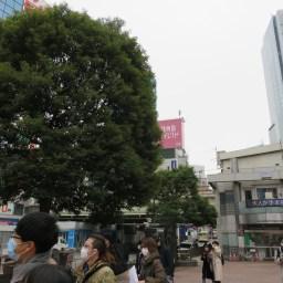 駅前樹木/駅前交番