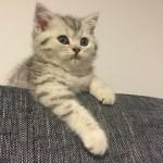 猫を飼い始めました!