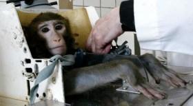 Çin, hayvan deneyleri için tarihi bir karar verdi