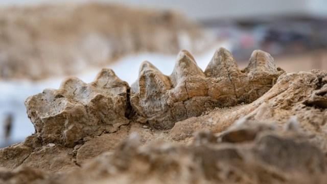Önemli keşif: Bilim insanları antik hayvanat bahçesi buldu