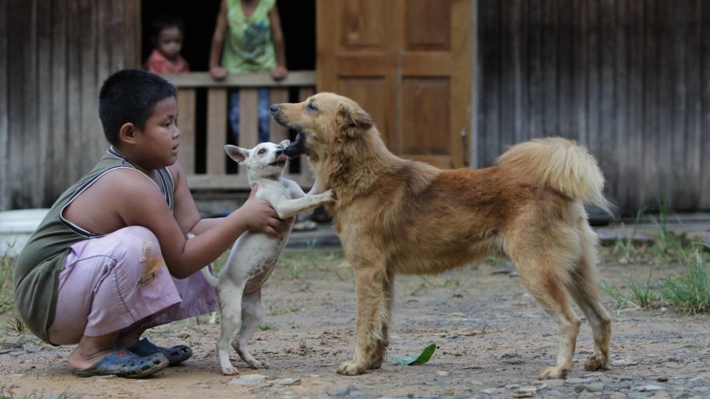 Köpeklerden insana geçen koronavirüs tespit edildi.
