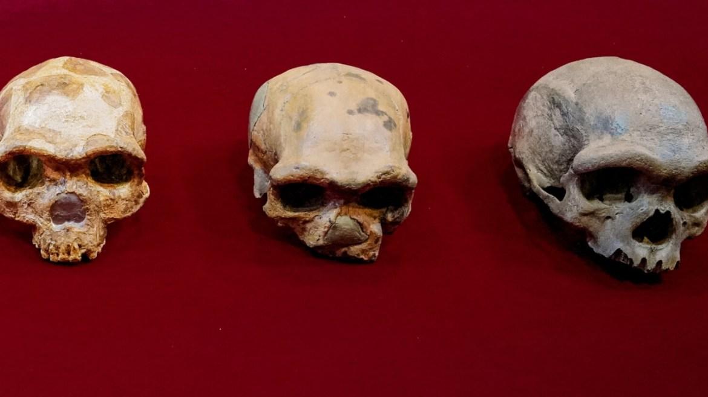 Eski insan türleri