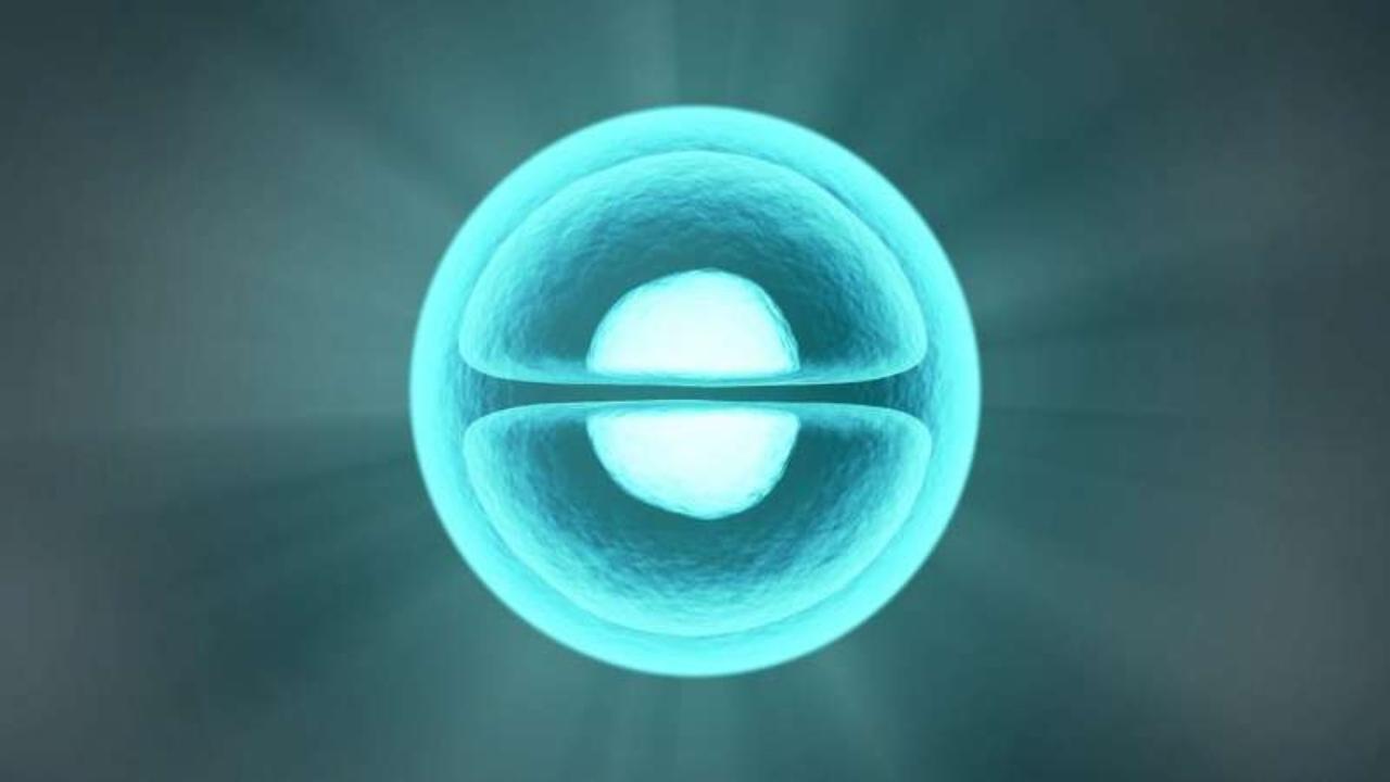 Kök hücre ile embriyo