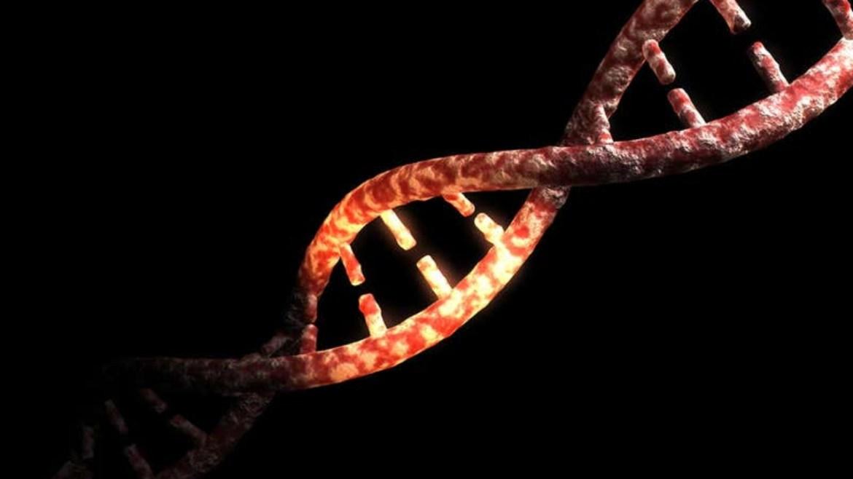 İnsan DNA'sı