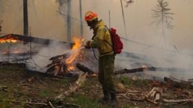 Orman yangınları: İklim mi, sabotaj mı?