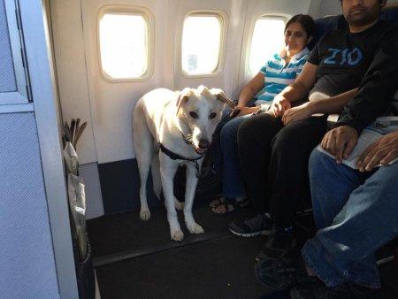piloto_animais_aviao_canada_14