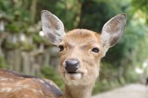 deer-539038_640