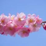 「最後の医者は桜を見上げて君を想う」を読んで