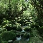 つるた療法 鶴田昇先生のロングインタビュー