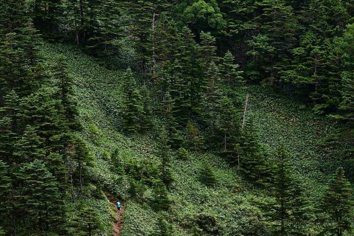 志賀山の登山道