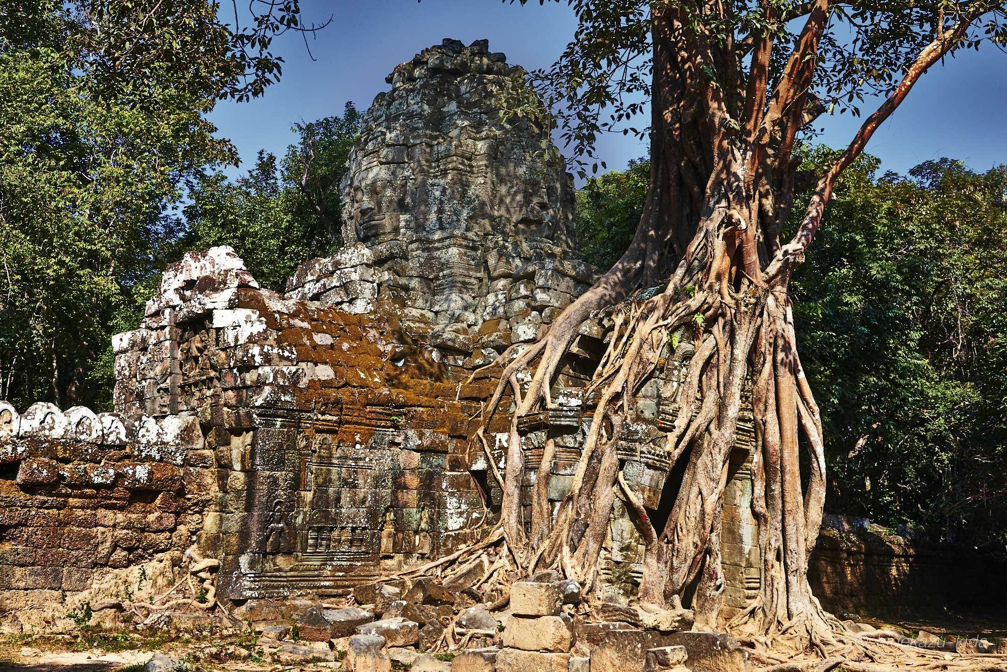 Angkor(アンコール)遺跡群にあるTaSom(タ・ソム)の東塔門にからみつくリエップの木