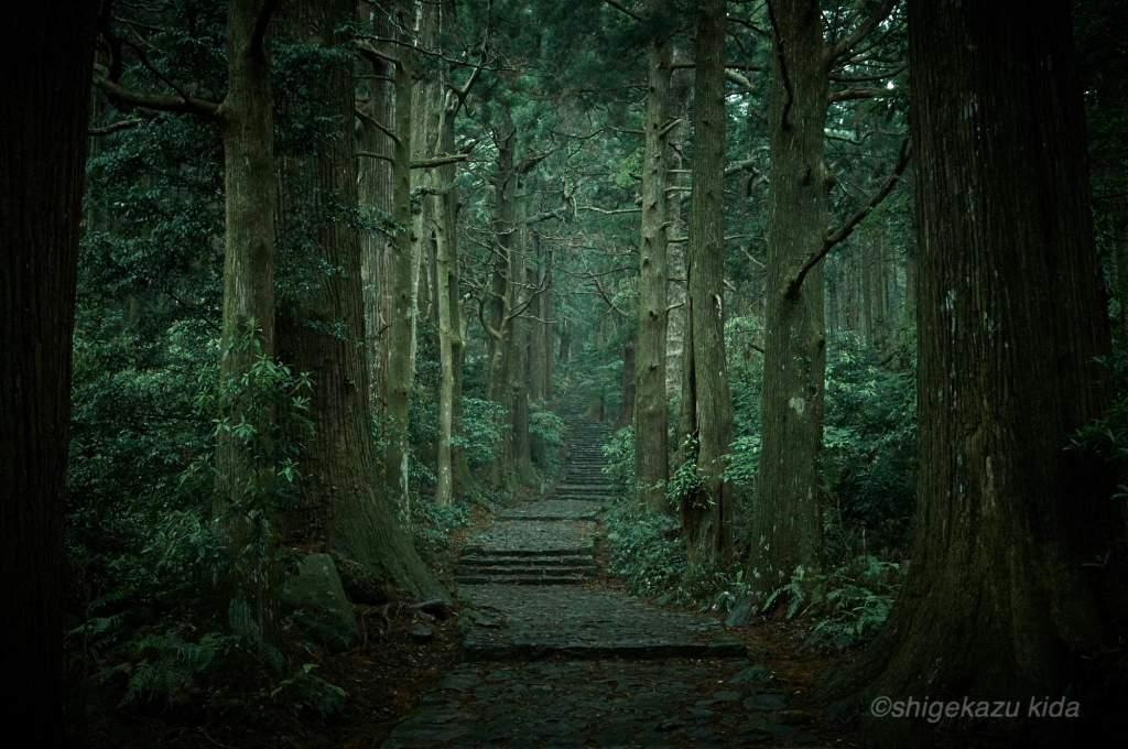 貴田茂和 shigekazu kida 熊野古道の熊野那智大社の大門坂