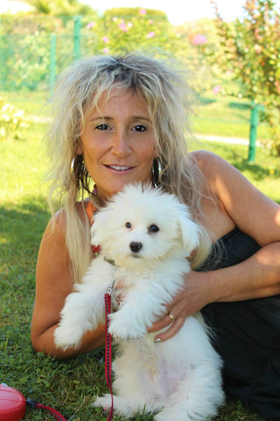 photos coton de tulear