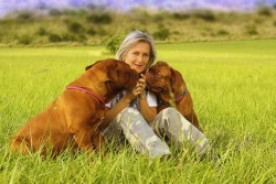 Image of two Dogue de Bordeaux's kissing their owner.