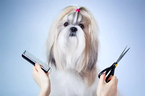 shih tzu grooming products for the perfect shih tzu