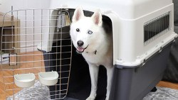 best plastic dog crate: image of dog in plastic dog crate
