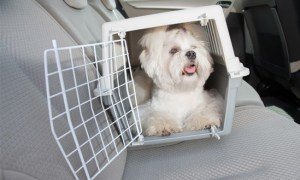 shih tzu in cheap dog crate