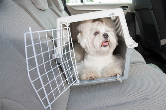 shih tzu in cheap dog crate