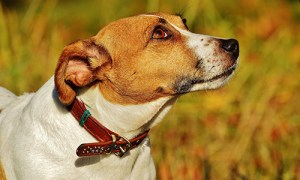 Collar harness or leash which is best