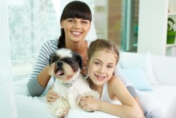 cost of owning a shih tzu