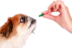 picture of dog taking supplement - glucosamine for dogs