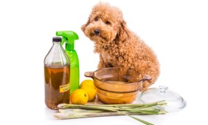 dog looking sad - home remedies for fleas