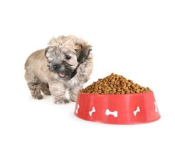 picture of shih tzu in front of dog food - best dog food for a shih tzu