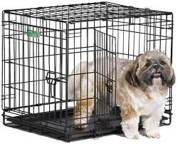 Shih Tzu puppy needs checklist