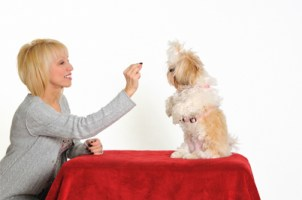 information about training your shih tzu dog
