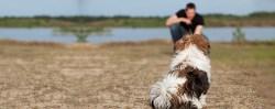 trainer training a shih tzu dog to come