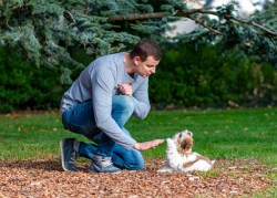 training shih tzu puppies potty