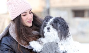 selecting a shih tzu puppy