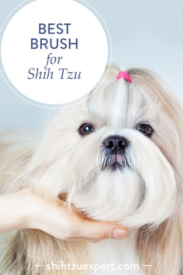 How to find the best brush for Shih Tzu? A cute Shih Tzu girl posing in a waiting position to be groomed