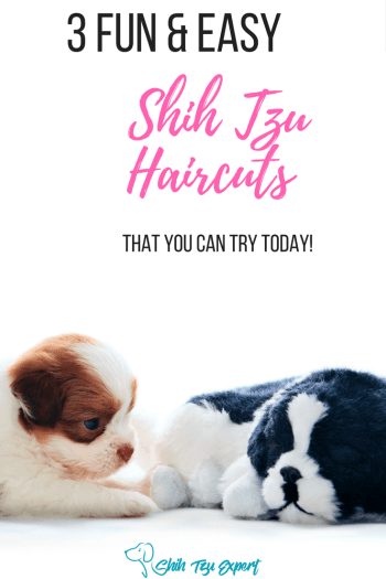 Shih Tzu haircuts - Teddy bear, Puppy, Lion cut for males and females [ and other Safe dog grooming tips! ] #ShihTzu #ShihTzuHaircuts #ShihTzuGrooming #DogGrooming