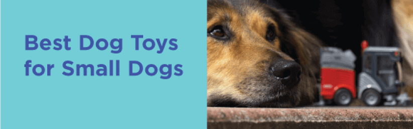 Best Dog Toys for small dogs