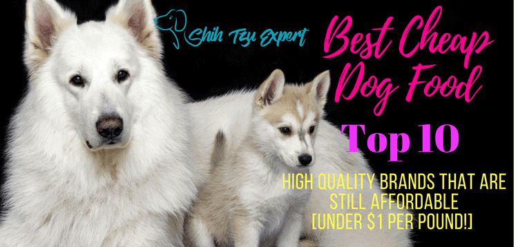 Best Cheap Dog Food Featured image
