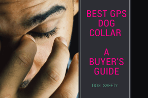 4 Best GPS Dog Collars :  GPS trackers that would work BEST for you[And your Pup!]