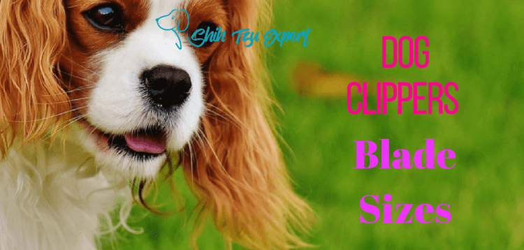 Dog Clippers Blade Sizes : Find out what are best for your dog.